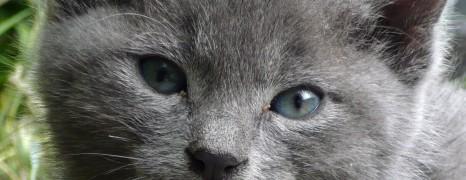 Și pisicile au o singură viață, nu-i așa?…