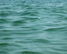 Apropo de Darwin: plec la mare…